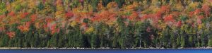 Acadia-Color-24x96