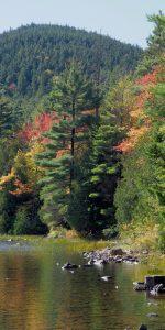 Acadia-Tree-18x36