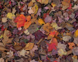 Fall-Leaves-16x20