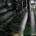 Sun Rays 16x20 768